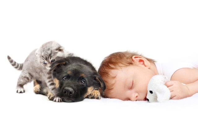 Sleeping Baby Boy with toy dog, puppy and kitten.