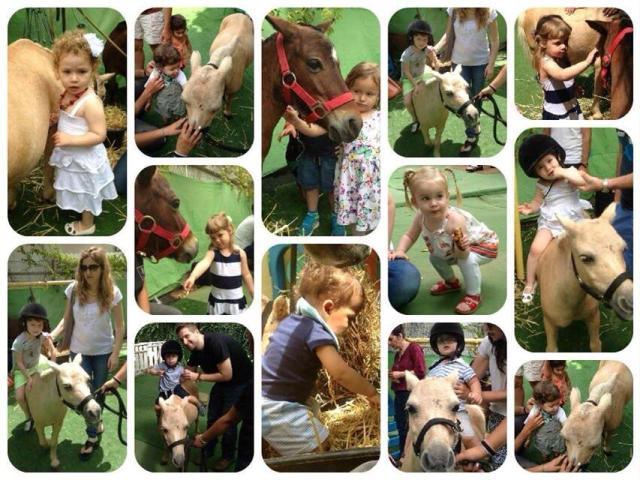 הפעלות סוסי פוני בגנים ובתי ספר - להזמנה: 052-2514010