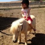 סוסי פוני יום הולדת - חוויה - להזמנה: 052-2514010