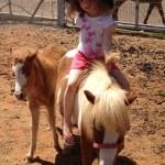 פעילות עם סוסים - מיניאטוריים - סוסי פוני - להזמנה: 052-2514010
