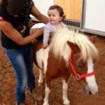 חוויה לילדים - סוס פוני מיניאטורי - להזמנה: 052-2514010