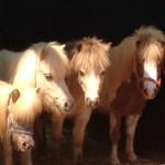 סוס פוני מיניאטורי יום הולדת מושלמת - להזמנה: 052-2514010