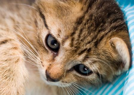 על חתולים והריון? שני חתולים ותינוק?